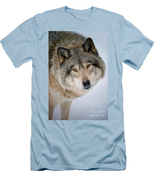 Timber Wolf Pictures 255 Men's T-Shirt (Slim Fit) by Wolves Only