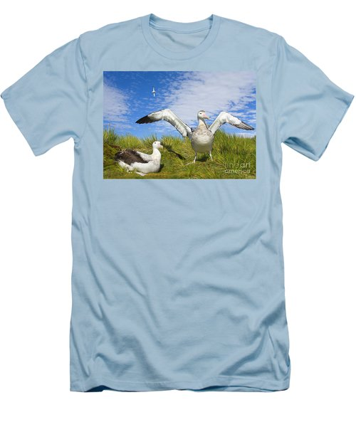 Wandering Albatross Courting  Men's T-Shirt (Slim Fit) by Yva Momatiuk John Eastcott