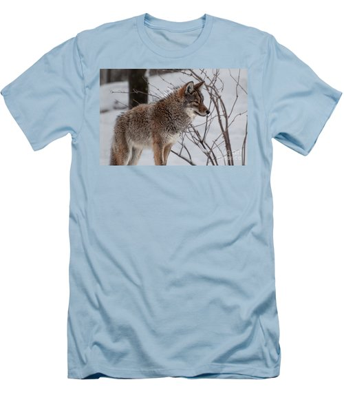 Winter Coyote Men's T-Shirt (Athletic Fit)