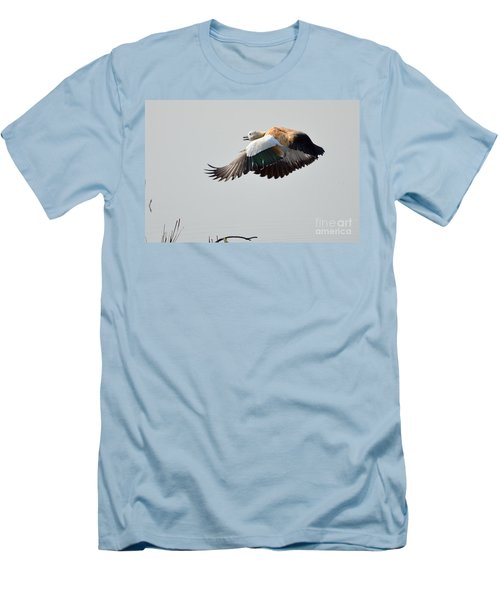 Brahminy Shelduck Men's T-Shirt (Slim Fit) by Fotosas Photography