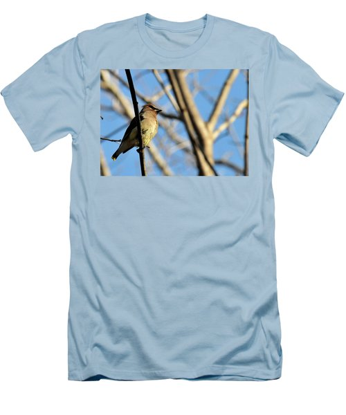 Cedar Wax Wing Men's T-Shirt (Athletic Fit)