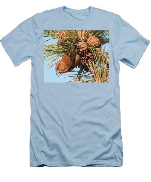 Crossbill Men's T-Shirt (Slim Fit) by Judd Nathan
