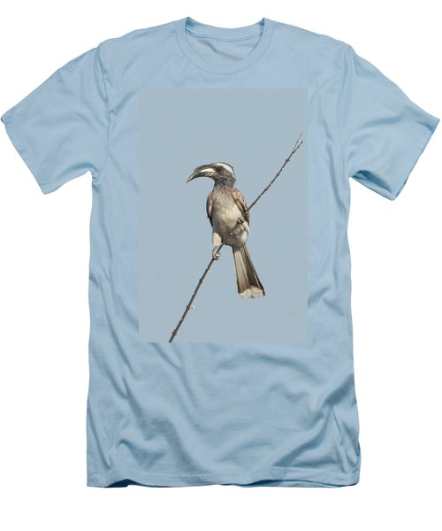 African Grey Hornbill Tockus Nasutus Men's T-Shirt (Athletic Fit)