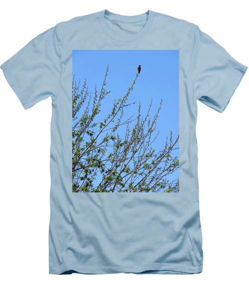 American Kestrel Atop Pecan Tree Men's T-Shirt (Athletic Fit)