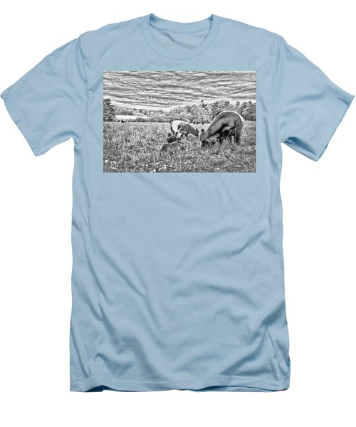 Men's T-Shirt (Slim Fit) featuring the digital art Belted Galloway Beef Cattle by Daniel Hebard