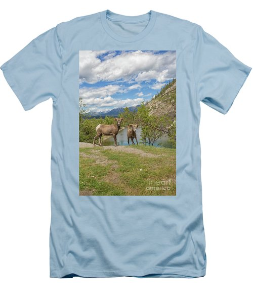 Bighorn Sheep In The Rocky Mountains Men's T-Shirt (Slim Fit) by Patricia Hofmeester