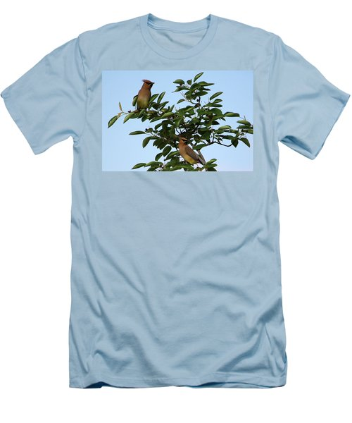 Cedar Waxwing Pair Men's T-Shirt (Athletic Fit)