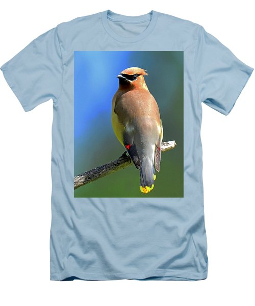 Gorgeous Cedar Waxwing Men's T-Shirt (Slim Fit) by Rodney Campbell
