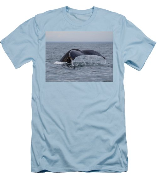 Humpback Whale Men's T-Shirt (Slim Fit) by Trace Kittrell