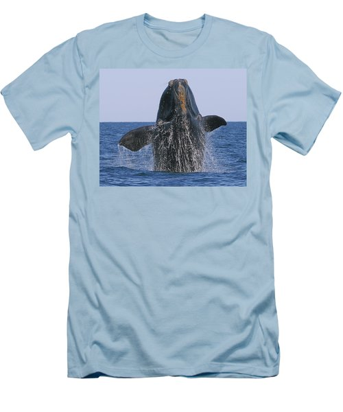 North Atlantic Right Whale Breaching Men's T-Shirt (Athletic Fit)