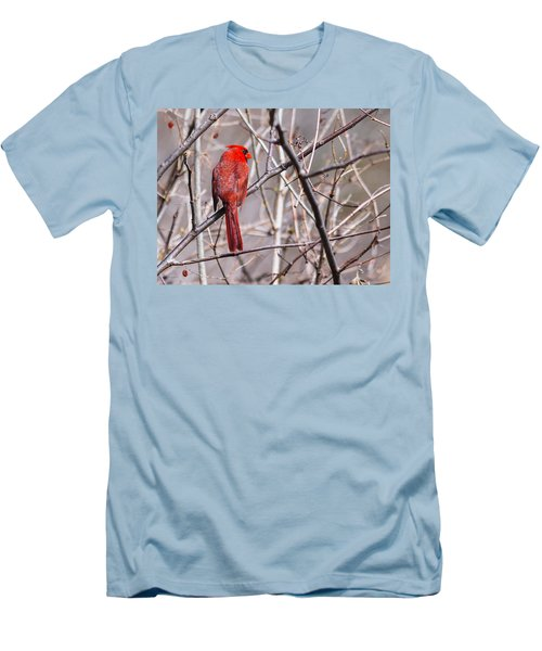 Northern Cardinal In The Sun Men's T-Shirt (Slim Fit) by Edward Peterson