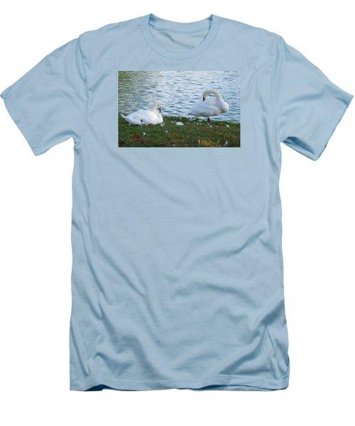 Preening Swans Men's T-Shirt (Athletic Fit)