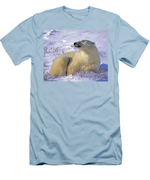 Sleepy Polar Bear Men's T-Shirt (Athletic Fit)