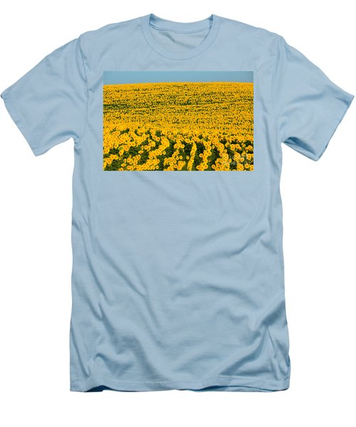 Sunflowers Galore Men's T-Shirt (Slim Fit) by Catherine Sherman