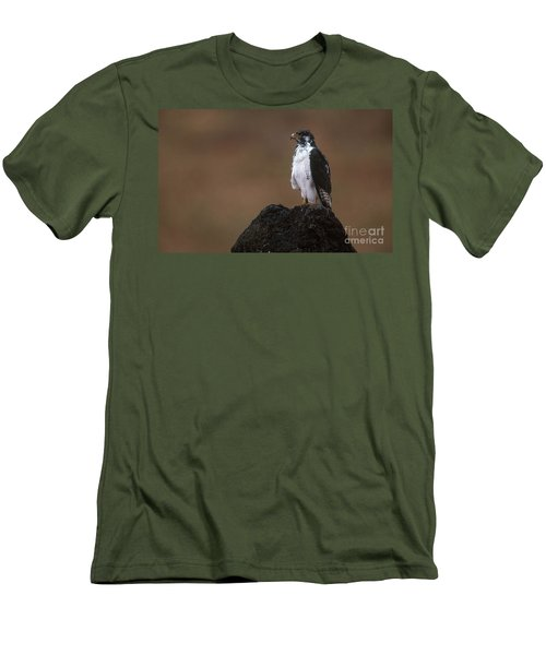 Augur Buzzard Men's T-Shirt (Athletic Fit)