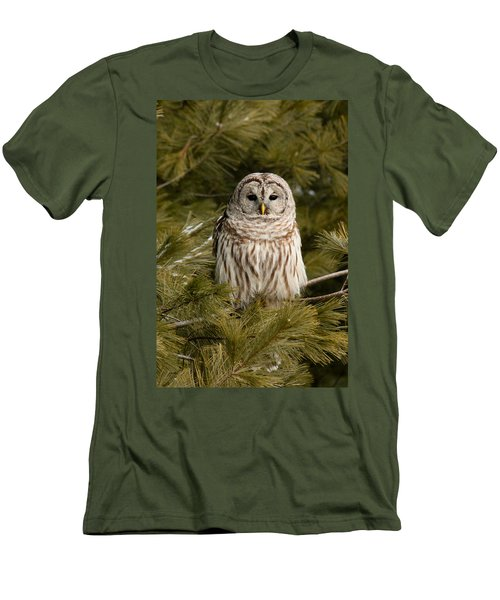 Barred Owl In A Pine Tree. Men's T-Shirt (Slim Fit)