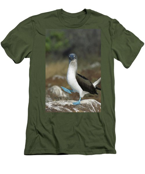 Blue-footed Booby Courtship Dance Men's T-Shirt (Slim Fit) by Tui De Roy
