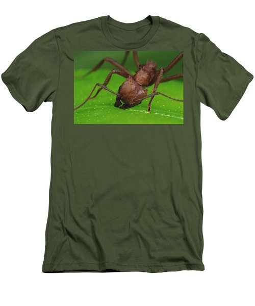 Leafcutter Ant Cutting Papaya Leaf Men's T-Shirt (Slim Fit) by Mark Moffett