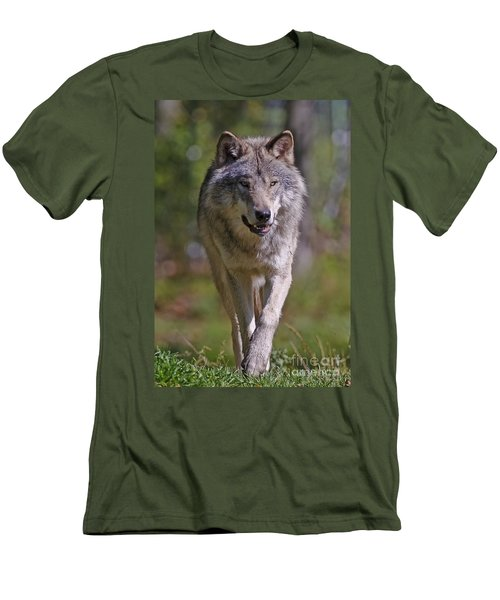Men's T-Shirt (Slim Fit) featuring the photograph Timber Wolf  by Wolves Only