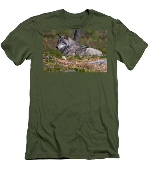 Timber Wolf Men's T-Shirt (Slim Fit) by Wolves Only