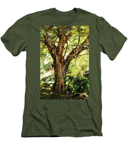 Kingdom Of The Trees. Peradeniya Botanical Garden. Sri Lanka Men's T-Shirt (Slim Fit) by Jenny Rainbow