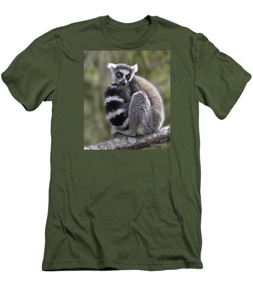 Ring-tailed Lemur Men's T-Shirt (Slim Fit) by Liz Leyden
