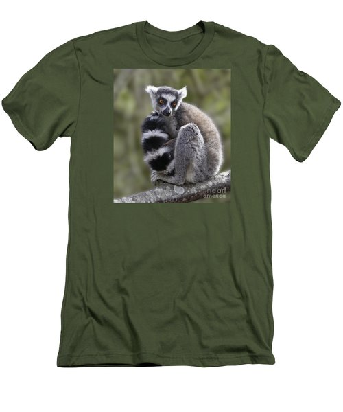 Ring-tailed Lemur Men's T-Shirt (Athletic Fit)