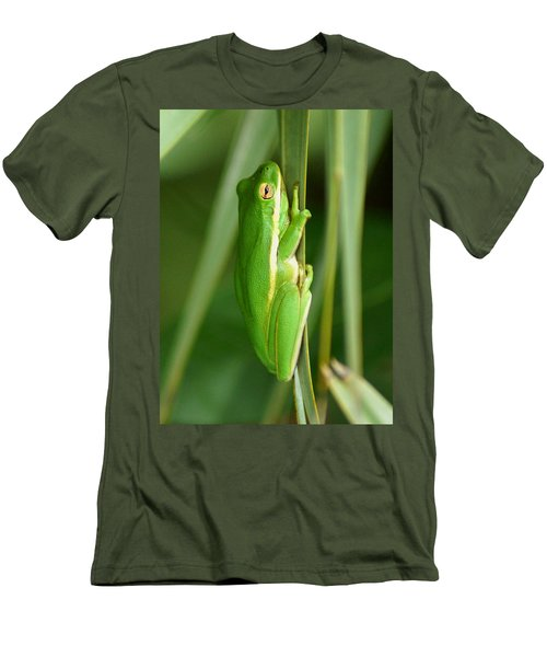 American Green Tree Frog Men's T-Shirt (Athletic Fit)