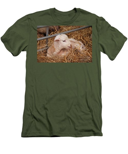 Baby Lamb Men's T-Shirt (Athletic Fit)