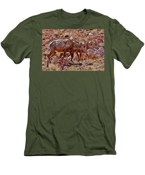 Men's T-Shirt (Slim Fit) featuring the photograph Bighorn Canyon Sheep Trio by Janice Rae Pariza