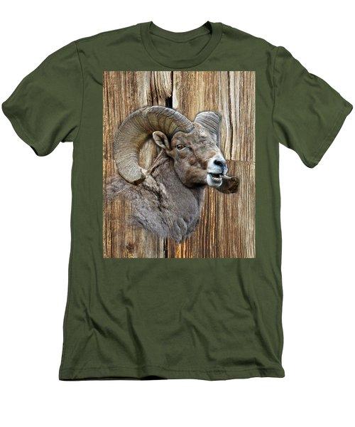 Bighorn Sheep Barnwood Men's T-Shirt (Slim Fit) by Steve McKinzie
