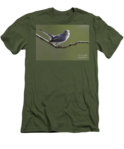 Blue-gray Gnatcatcher Men's T-Shirt (Athletic Fit)