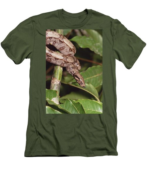 Boa Constrictor Coiled South America Men's T-Shirt (Athletic Fit)