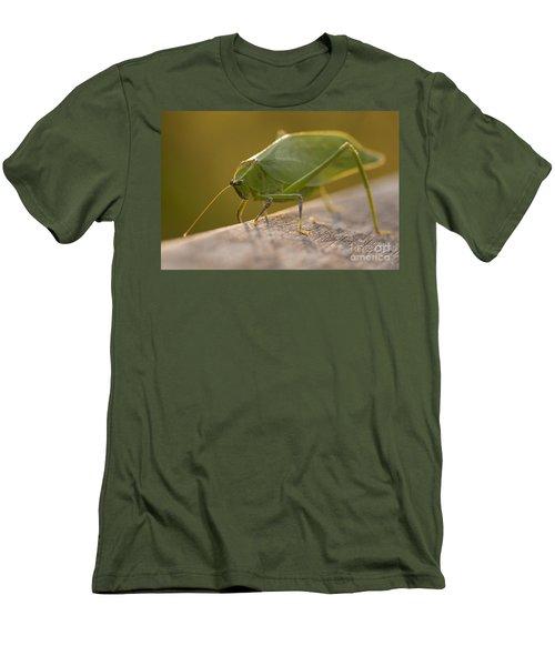 Broad-winged Katydid Men's T-Shirt (Slim Fit) by Meg Rousher