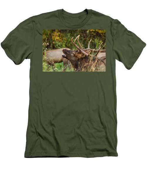 Bugling Bull Elk Men's T-Shirt (Athletic Fit)