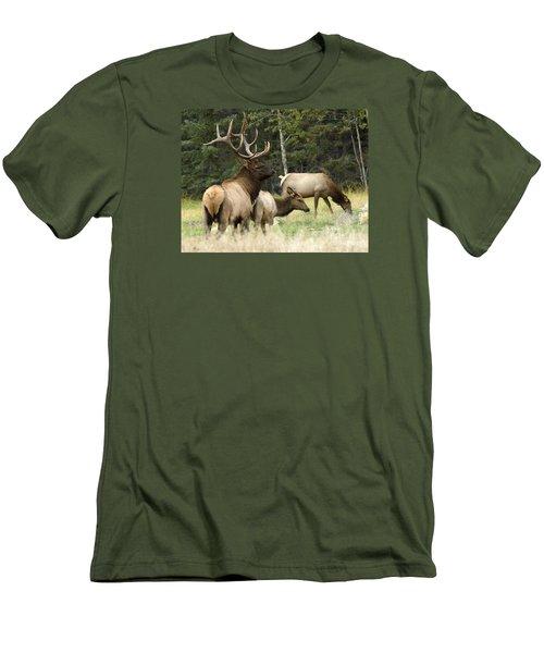 Bull Elk With His Harem Men's T-Shirt (Slim Fit) by Bob Christopher
