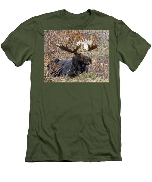 Bull Moose In Autumn Men's T-Shirt (Slim Fit) by Jack Bell