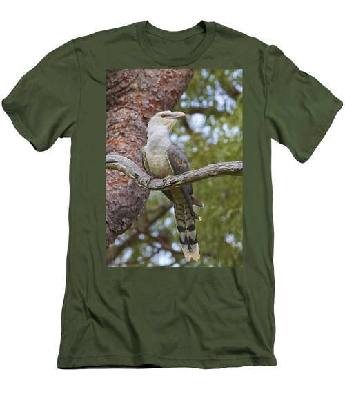 Channel-billed Cuckoo Fledgling Men's T-Shirt (Slim Fit) by Martin Willis