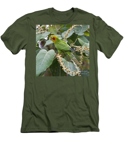 Chiriqui Conure 2 Men's T-Shirt (Athletic Fit)
