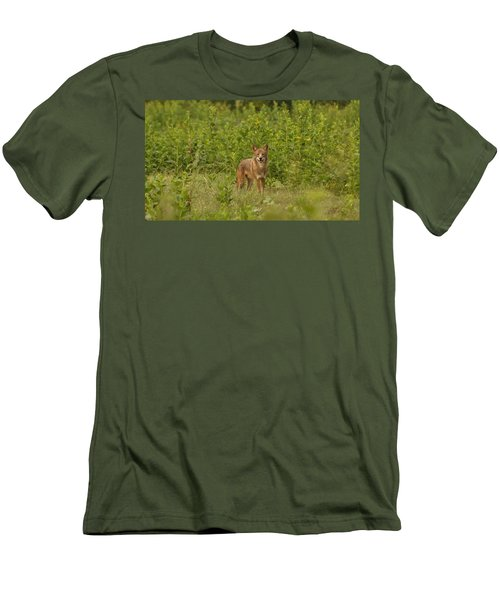 Coyote Happy Men's T-Shirt (Athletic Fit)