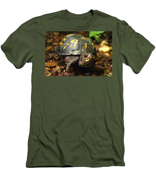 Eastern Box Turtle Men's T-Shirt (Athletic Fit)