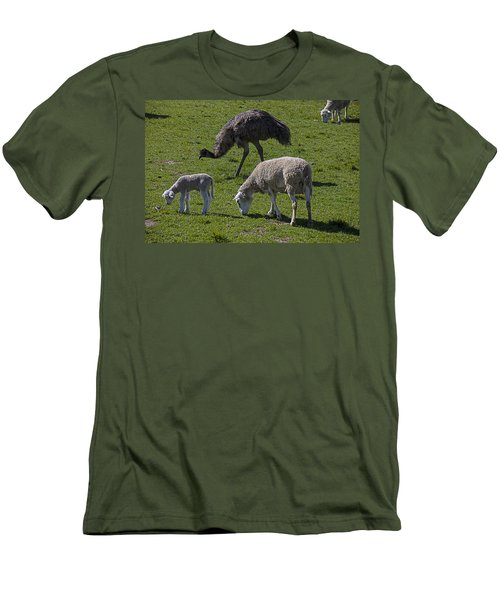 Emu And Sheep Men's T-Shirt (Slim Fit) by Garry Gay