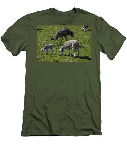Emu And Sheep Men's T-Shirt (Slim Fit)