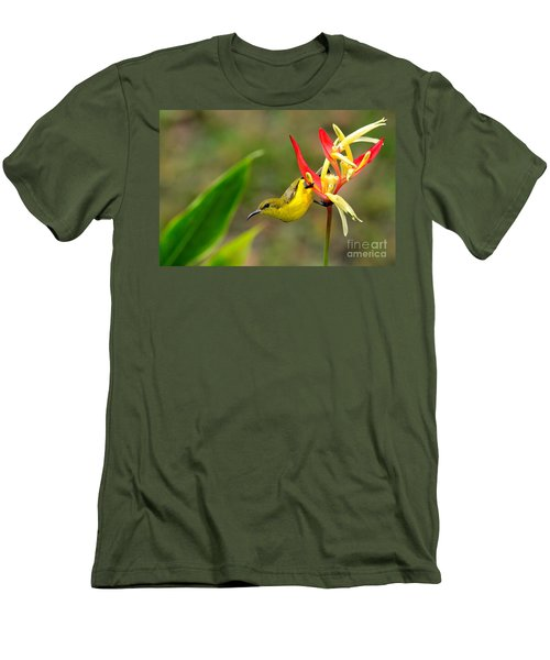 Female Olive Backed Sunbird Clings To Heliconia Plant Flower Singapore Men's T-Shirt (Slim Fit) by Imran Ahmed