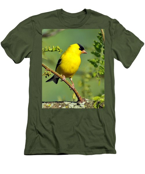 Goldfinch 328 Men's T-Shirt (Athletic Fit)
