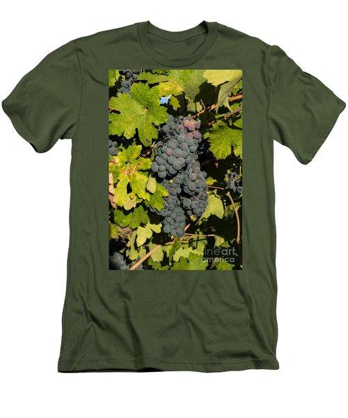 Grape Harvest Men's T-Shirt (Athletic Fit)