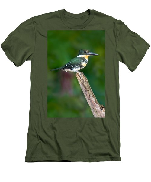 Green Kingfisher Chloroceryle Men's T-Shirt (Slim Fit) by Panoramic Images