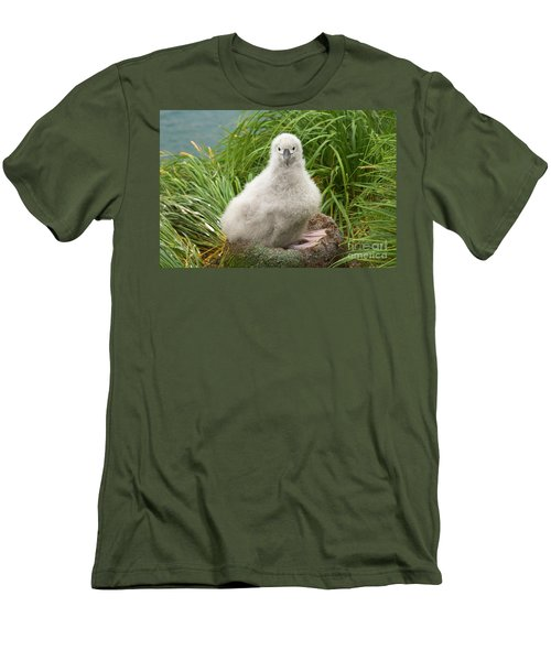 Grey-headed Albatross Chick Men's T-Shirt (Slim Fit) by Yva Momatiuk John Eastcott
