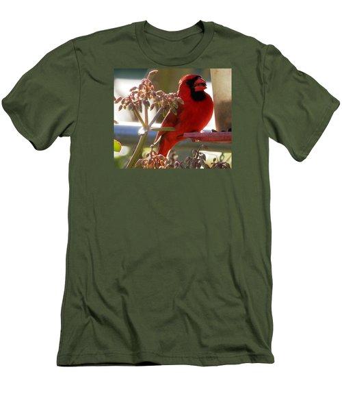 Handsome Red Male Cardinal Visiting Men's T-Shirt (Slim Fit) by Belinda Lee