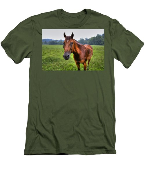 Horse In A Field Men's T-Shirt (Athletic Fit)